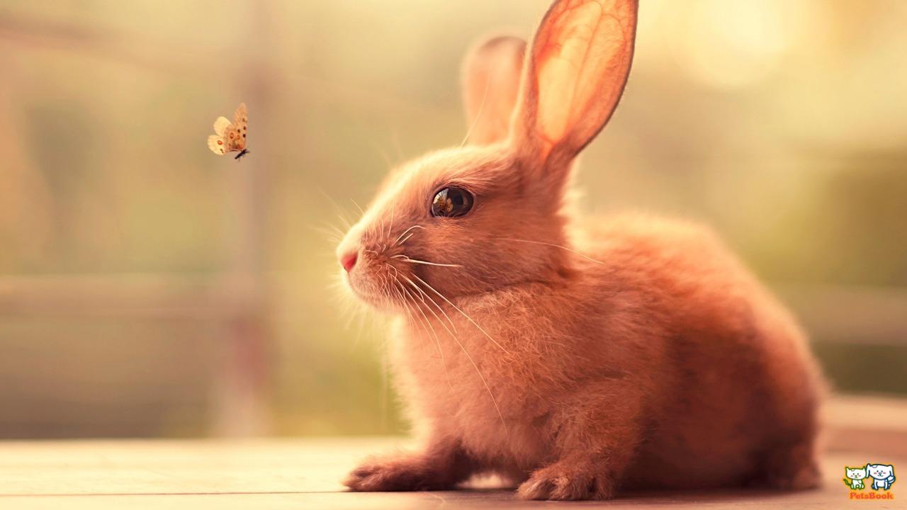 رفتار خرگوش