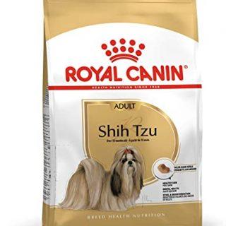 شیتزو